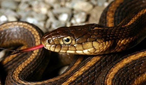 ‼️Առաջին բուժօգնությունը՝ օձի խայթոցի դեպքում🐍